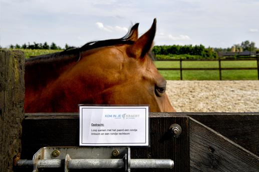 Paardencoaching Ommen - Kom in je kracht - Tarieven